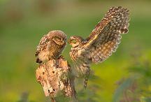 dieren , vroege vogels e.d.