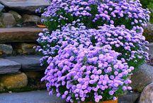 gardens I love it!