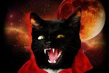 Feline Friday / CAT ATTACK! / by Sashamy Theory