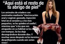 Animales / No al maltrato animal!!