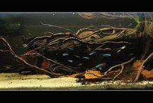 biotope aquarium