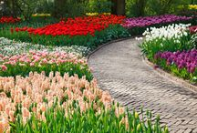 FLOWER FIELDS / Public Domain and Creative Commons Licenses