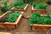 Сад -огород