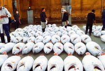 tsukiji / 築地市場 #sakamainc