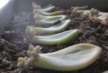 Suculents&Cactuses