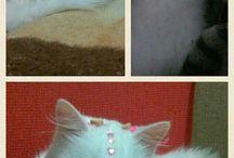 Cat Charlotte
