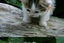 Oh..so..cute / by Gayathri Ram
