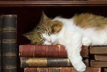 Books | Cats