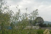 sky through the grass,ex-Tholl