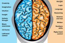 left n right brain