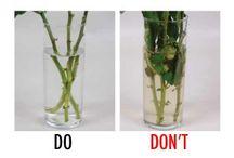 Flower Tips / Tips for longer lasting flowers