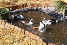 Ducks / by Tammy Egley