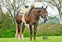 Top American Quarter Horses