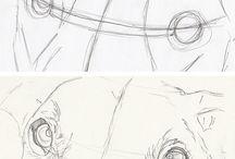 dog anatomy and drawing