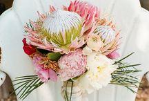 {BN Inspired} Nectarine Bride