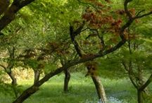 Must-Visit Gardens