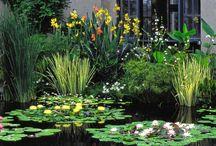 Bog Water Plants