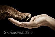 Rottweiler Love❤️ / by Brandy Jones
