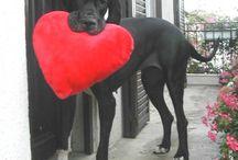 Valentine's Pets