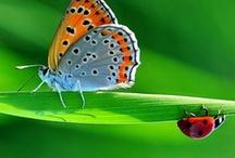 A / BORBOLETAS / A borboleta pode ter o peso mínimo de 0,3 gramas e as mais pesadas podem chegar a pesar 3 gramas; alguns tipos de borboletas podem chegar a medir até 32 centímetros de asa a asa.
