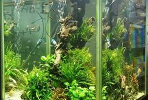 Tropical Freshwater Tank Ideas