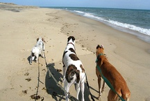 Dogs on vacation / Impossible to leave your doggy at home?   We say bring 'em along.