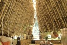 bambooo... / by Karla Diaz