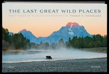 Celebrating 40 Years / Legendary nature photographer Thomas D. Mangelsen has traveled throughout the natural world for over 40 years observing and photographing the Earth's last great wild places.
