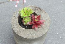 Garden planters / Garden planters and  arrangements