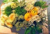 Flowers / Composizioni floreali