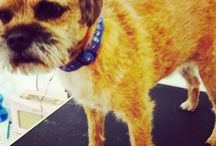 Our dog grooming customers