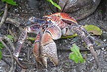 Invertebrate Facts / Discover amazing facts about invertebrates