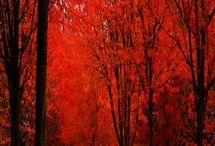 Paysage de forêt / Promenade dans les bois