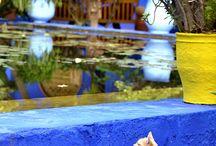 Giardini Majorelle / Blu, Giallo