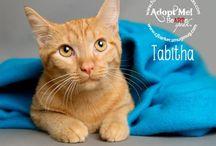 Adopt a Tabby