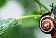 Artículos EcoBrotes / Reflexiones y consejos prácticos para tu #huertourbano y #huerto ecológico. www.ecobrotes.es