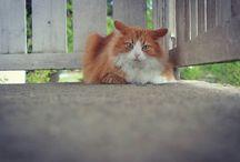 cats / cats life