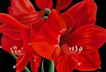 Art, Florals / by Brenda Davis