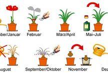Garten/Pflanzen
