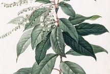 roślinki botaniczne