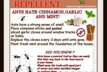 I HATE ANTS!!!! / by Kim Marshall