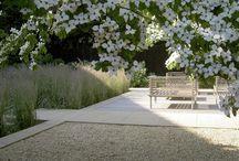 Kolor w ogrodzie Biały