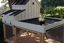 chickens / With chicken coop ideas and designs