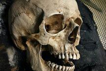 Skulls / Skull references