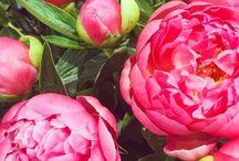 [Blumen]