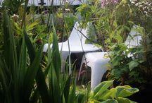 My garden / Garden
