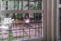 VIDEO DESDE LA VENTANA / Un niño en el jardín... observa y espera....  Vídeo grabado desde el interior de su cuarto.