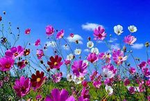 Flowers - Beauty and Perfection in colour, scent and happiness!!!  / Flowers make me happy