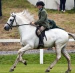 The Connemara Pony / The Connemara pony is a pony breed originating in Ireland. They are known for their athleticism, versatility and good disposition. The breed makes excellent show ponies.