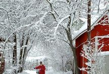 winter wonderland / by Lois Zacharopoulos